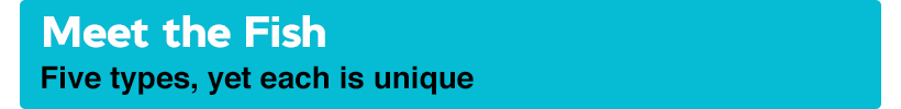 Meet the Fish